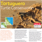 FOB: Tortuguero Turtle Conservation